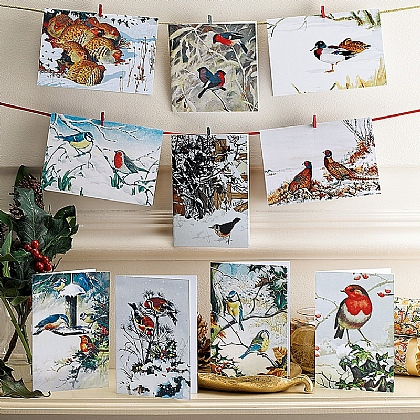 Museum Selection Winter Birds Cards