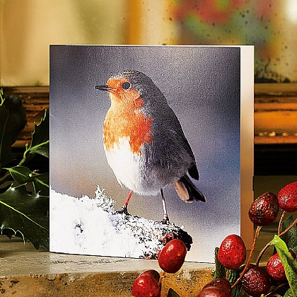 Museum Selection Robin Birdsong Cards