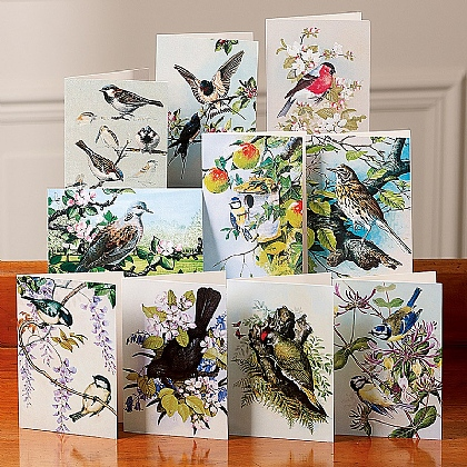 Birds of Britain Cards