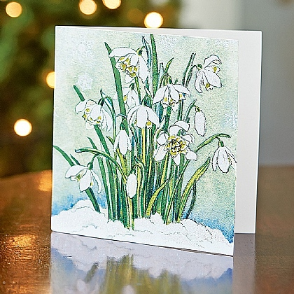 Luxury Finish Snowdrops Cards