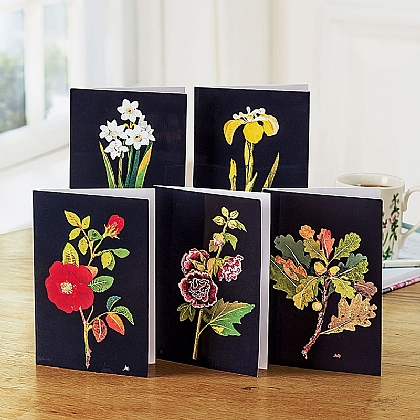 20 Mrs Delany Botanics Greetings Cards