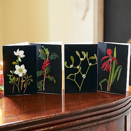 Mrs Delany Christmas Botanicals Cards