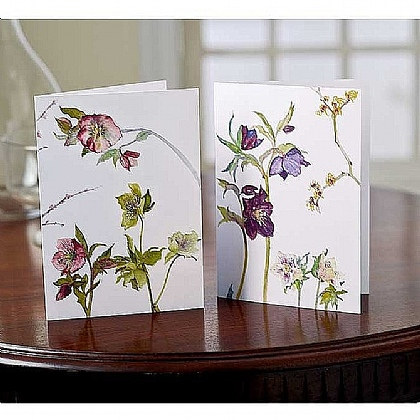 Museum Selection 10 Blackadder Hellebores Cards