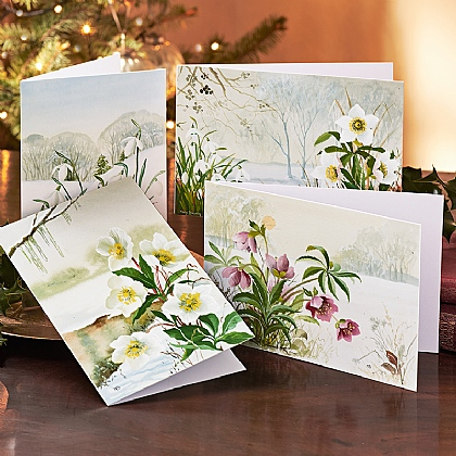 Mary Brown Winter Florals Cards