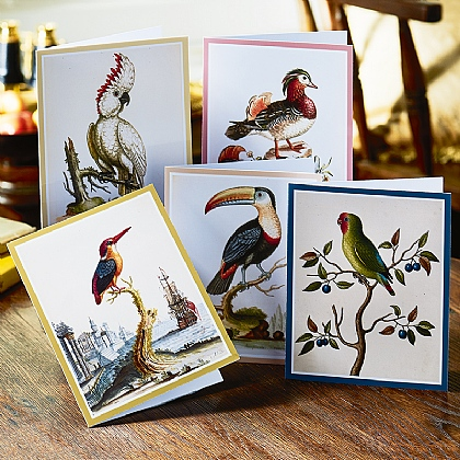 20 Edwards Exotic Birds Cards