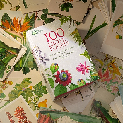 100 Exotic Plants Postcards