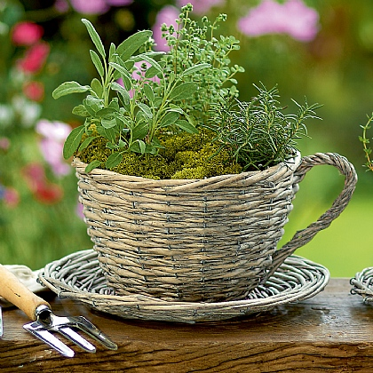 Wicker Teacup Planter