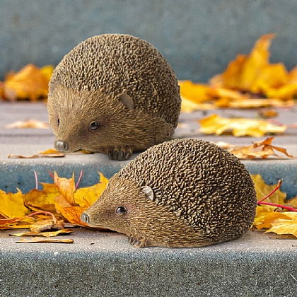 Hoffman Hedgehogs